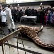 La giraffa Marius non si deve riprodurre04