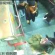 Rubava portafogli in Tre Passi nella metro di Milano01