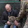 Putin entra nella gabbia del leopardo (foto02