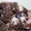 Il cane che assomigliava ad un cumulo di spazzatura07