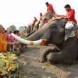 La Thailandia festeggia gli elefanti con buffet di frutta e verdura4