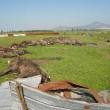Terra dei Fuochi, ritrovate 24 carcasse di bufale in stato di decomposizione