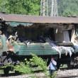 Mosca, incidente tra due treni a Naro-Fominsk: diversi morti (foto) 5