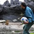 Giocare a calcio con i leoni? Lo zoologo Kevin Richardson è in grado di farlo01