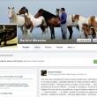 Charlie, pony più piccolo del mondo rapito e restituito per 3mila euro 2