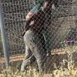 Spagna, 700 migranti assaltano frontiera Melilla 8