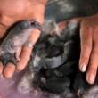 I coniglio-elefante con la proboscide nati a Gaza: le foto 3