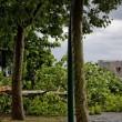 Maltempo Napoli, bomba d'acqua e vento forte in città02