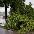 Maltempo Napoli, bomba d'acqua e vento forte in città06