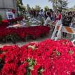Michael Jackson moriva 5 anni fa: fan spargono 15 rose sulla tomba05