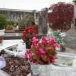 Caso Yara Gambirasio : la tomba di Yara al cimitero di Brembate20