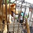 Il 21 giugno i cinesi mangeranno 10mila cani 1