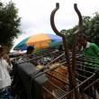 Il 21 giugno i cinesi mangeranno 10mila cani 2