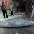 Gaza, oltre 170 morti e 1000 feriti: continua il lancio di missili Israele-Hamas 06