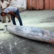 Gaza, oltre 170 morti e 1000 feriti: continua il lancio di missili Israele-Hamas 08