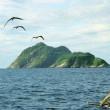 Snake Island, l'isola della vipera d'oro: il serpente più letale al mondo 6