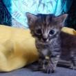 Gattino sempre triste, un fenomeno virale sul web 13