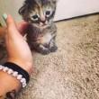 Gattino sempre triste, un fenomeno virale sul web 1