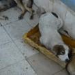 Canili pubblici in Romania02