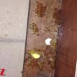 Justin Bieber tira uova casa vicino03