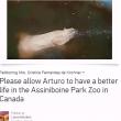 La petizione per salvare Arturo06