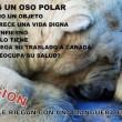 La petizione per salvare Arturo05