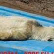 La petizione per salvare Arturo02
