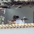 Pamela Anderson in Sardegna di nuovo col marito Rick Salomon08