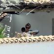 Pamela Anderson in Sardegna di nuovo col marito Rick Salomon07