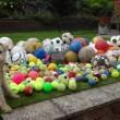 Waffle, il cane che colleziona palloni4