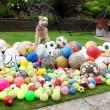 Waffle, il cane che colleziona palloni02