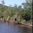 Bigfoot avvistato in Virginia: la foto scattata a giugno virale sul web