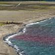 Il mare è rosso a Castellammare di Stabia 04