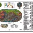 La mappa di Marte: ecco la cartografia del pianeta rosso (FOTO)