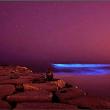 Alghe luminescenti sulla spiaggia di Sydney03