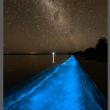 Alghe luminescenti sulla spiaggia di Sydney01