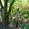 Messina, cane impiccato ad un albero: taglia da 10mila euro sui killer FOTO