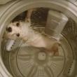 Hong Kong, mette il cane in lavatrice e pubblica le foto su Facebook01