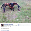 Chica the DogSpider, cane vestito da tarantola spaventa passanti01