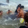 Vasto, sette capodogli arenati sulla spiaggia di Punta Penna02