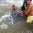 Vasto, sette capodogli arenati sulla spiaggia di Punta Penna03