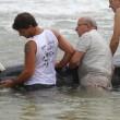 Vasto, sette capodogli arenati sulla spiaggia di Punta Penna09