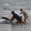 Vasto, sette capodogli arenati sulla spiaggia di Punta Penna10
