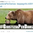 Orsa Daniza uccisa durante la cattura. Proteste Twitter. Grillo lancia hashtag 2