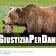 Orsa Daniza uccisa durante la cattura. Proteste Twitter. Grillo lancia hashtag 3