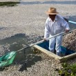 """Mistero dei pesci morti in Messico: fenomeno """"non dovuto a cause naturali"""" FOTO 2"""