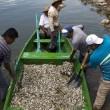 """Mistero dei pesci morti in Messico: fenomeno """"non dovuto a cause naturali"""" FOTO 6"""