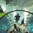 piscina profonda Italia Misura 40 metri acque termali 01