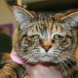 Tucker, la gatta malata e più triste del mondo è stata adottata FOTO