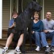 Zeus è morto: era il cane più alto del mondo, misurava 112 cm alla spalla05
